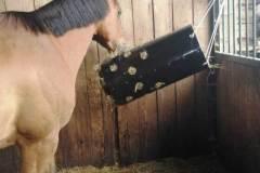 hest-spiser-2