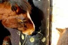 hest-spiser3