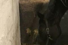 tdj_hayfeeder_corner_hest_spiser_fra_bunden2