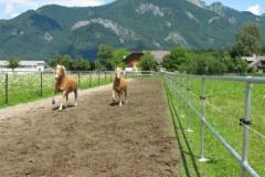 Græsarmering_HIT_Hestetræning_Jordarmering.dk_