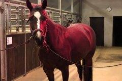 tdj_heste_horseheater_varmelamper_m_hest