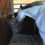 TDJhors.dk, TDJ Hayfeeder Corner, høhæk, slowfeeder, heste, fodring af heste,