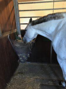TDJ Hayfeeder Corner, høhæk, slowfeeder, fodring af heste, tildeling af hø, heste,