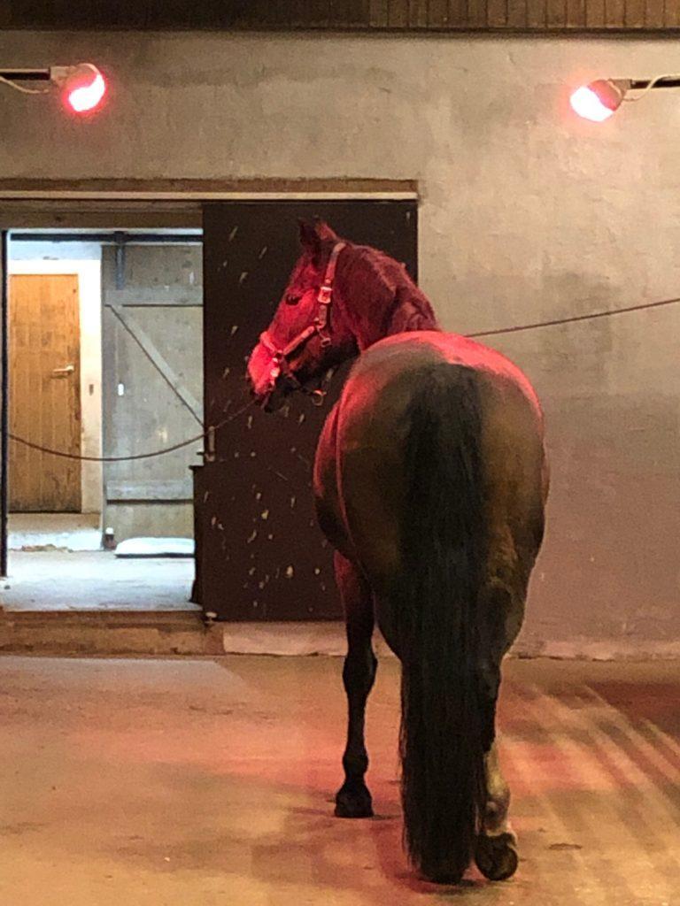TDJ Horseheater - ren velvære til din hest