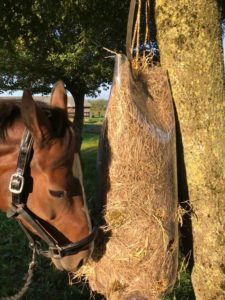 TDJhors, Hayfeeder, høhæk, slowfeeder, heste, fodring af heste, undgå spild af hø,