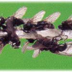 Fluer på snor - zoomet, fluesnor, tdj flystop