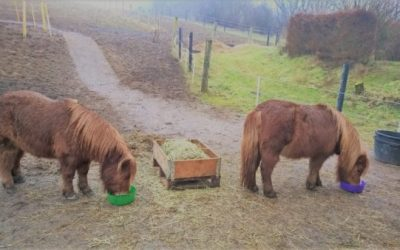 TDJhors, TDJ Heavymats, muddermåtter, undgå mudder på folden, heste, hestefold,